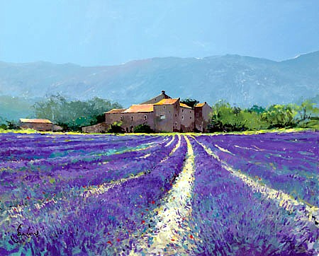 Lavender near Oppende-le-Vieux by Jeremy Barlow