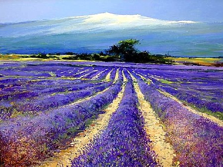 Lavender Under Mt. Ventous by Jeremy Varlow