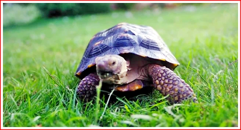 Wondering if the tortoise's agent got him more than scale for this  ground level walk-on?